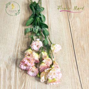 champagne lisianthus flower stem
