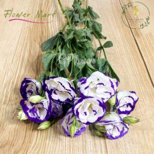 white and purple lisianthus flower stem