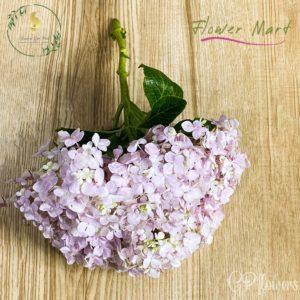 pink hydrangea flower stem
