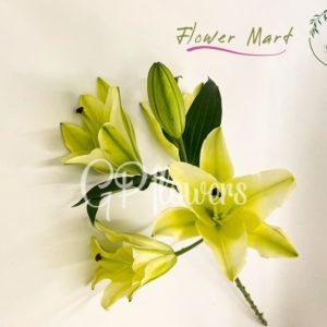 green lily flower stem
