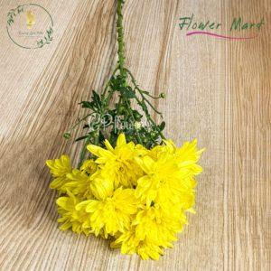Yellow chrysanthemum flower stem