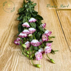 white and pink lisianthus flower stem
