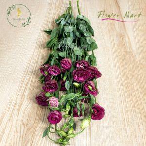 wine red lisianthus flower stems