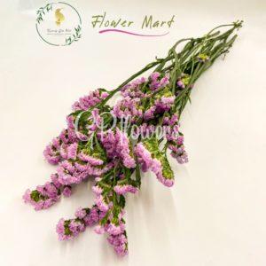 fuschia statice flower stems