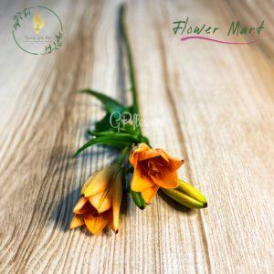 orange lily flower stems