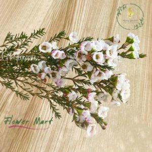 white wax flower stems