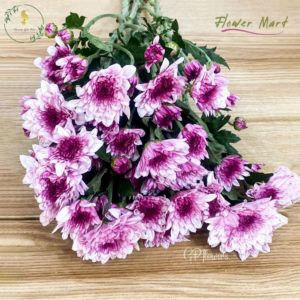 mix purple chrysanthemum flower stems