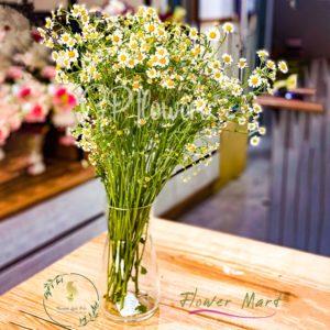 daisy flower stems