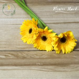 Yellow Gerbera flower stems